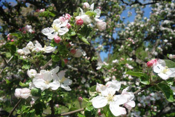 <a href='https://www.salesko.cz/priroda-krasne-kvete-3-soutez/' title='Jaro v plném květu – 3. soutěž'>Jaro v plném květu – 3. soutěž</a>